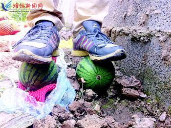 昌乐红河镇新品西瓜上市 瓜皮坚硬好运输--潍坊