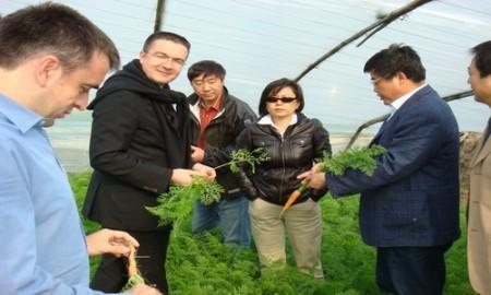 田苑公司通过土地流转在稻田镇建成有机蔬菜基地600