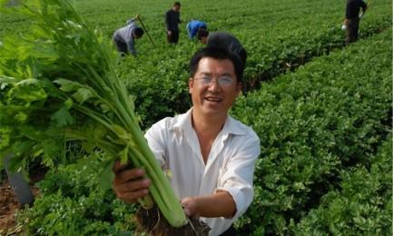 寿光市稻田镇:以更加扎实的工作推动全镇科学发展